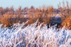 Paysage d'automne avec le gel image libre de droits