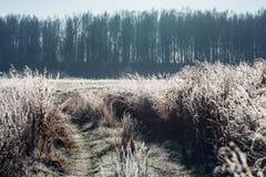 Paysage d'automne avec le gel photos libres de droits
