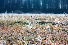Paysage d'automne avec le gel photographie stock