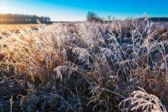 Paysage d'automne avec le gel photos stock