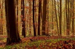 Paysage d'automne dans la forêt Photos stock
