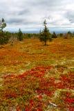 Paysage d'automne dans la forêt de la Laponie Photographie stock