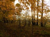 Paysage d'automne dans la forêt et des feuilles photographie stock