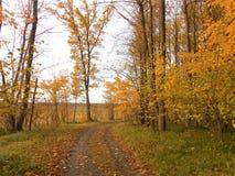Paysage d'automne dans la forêt et des feuilles photographie stock libre de droits