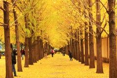 Paysage d'automne dans Pékin Photos libres de droits