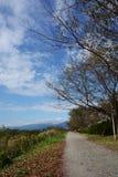 Paysage d'automne de chemin de rive photo stock