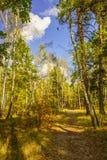 Paysage d'automne de forêt photographie stock libre de droits