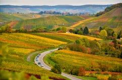 Paysage d'automne de l'Allemagne avec la vue sur des vignobles Photo libre de droits