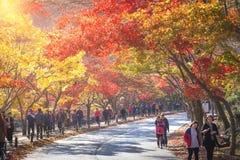 Paysage d'automne de la Corée, parc national de Naejangsan Image stock