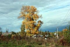 Paysage d'automne de pays Le grand arbre avec les feuilles jaunes, ciel bleu avec des nuages Photographie stock libre de droits