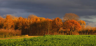 Paysage d'automne de quelques arbres colorés gentils avec le GR photos libres de droits