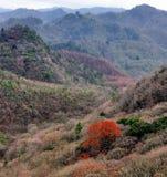 Paysage d'automne de Sichuan Images libres de droits