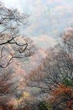 Paysage d'automne de Sichuan Image stock