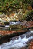 Paysage d'automne de Sichuan Photo libre de droits