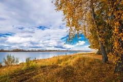 Paysage d'automne sur la rivière Enregistrement de la Sibérie occidentale, Novosibirsk image stock