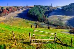 Paysage d'automne, un arbre sans feuilles, iny sur l'herbe verte, Photos libres de droits