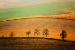 Paysage d'Autumn South Moravian avec cinq arbres et collines de ondulation de roulement Champs onduleux dans la République Tchèqu photographie stock