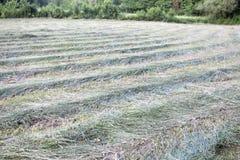 Paysage d'herbe fauchée photos libres de droits
