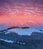 Paysage d'hiver à l'aube image libre de droits