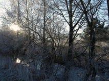Paysage d'hiver Photo libre de droits