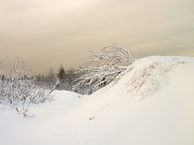 Paysage 4. d'hiver. images libres de droits