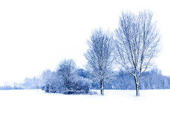 Paysage d'hiver Photographie stock