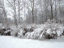 Paysage d'hiver après des chutes de neige Photo libre de droits
