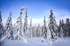 Paysage d'hiver, arbres couverts de neige dans les montagnes Karkonosze, Pologne image libre de droits