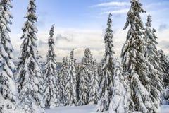 Paysage d'hiver, arbres couverts de neige dans les montagnes Karkonosze, Pologne photographie stock libre de droits