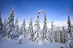 Paysage d'hiver, arbres couverts de neige dans les montagnes Karkonosze, Pologne photos libres de droits