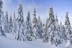 Paysage d'hiver, arbres couverts de neige dans les montagnes Karkonosze, Pologne photo stock