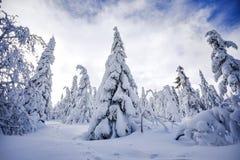 Paysage d'hiver, arbres couverts de neige dans les montagnes Karkonosze, Pologne images stock