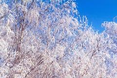 Paysage d'hiver : arbres dans le gel Photo stock