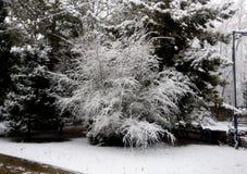 Paysage d'hiver - arbres givrés dans la forêt neigeuse Photo libre de droits