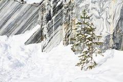 Paysage d'hiver avec l'arbre de neige et de sapin Photo stock