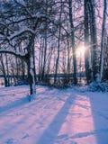 Paysage d'hiver avec l'arrangement du soleil parmi les arbres au lac s Photographie stock libre de droits