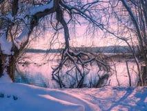 Paysage d'hiver avec l'arrangement du soleil parmi les arbres au lac s Photos stock