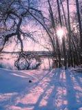 Paysage d'hiver avec l'arrangement du soleil parmi les arbres au lac s Photo libre de droits