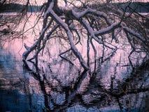 Paysage d'hiver avec l'arrangement du soleil parmi les arbres au lac s Image stock