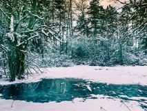 Paysage d'hiver avec l'arrangement du soleil parmi les arbres au lac s Images libres de droits