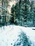 Paysage d'hiver avec l'arrangement du soleil parmi les arbres au lac s Photographie stock