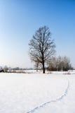 Paysage d'hiver avec l'empreinte de pas d'arbre et d'animal Photos libres de droits
