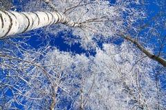 Paysage d'hiver avec la forêt couverte de neige Photo stock