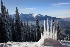 Paysage d'hiver avec la forêt de sapins couverte par la chute de neige importante en montagne de Postavaru, station de vacances d photo libre de droits