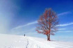 Paysage d'hiver avec la marche solitaire d'arbre et de personne Images libres de droits