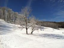 Paysage d'hiver avec la pente et l'arbre de ski couverts dans la neige photo libre de droits