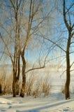 Paysage d'hiver avec les arbres givrés dans la lumière de lever de soleil Images stock