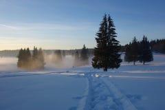Paysage d'hiver avec les sapins et le chemin Images stock