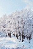 Paysage d'hiver - belle nature d'hiver avec la neige en baisse au-dessus de la forêt d'hiver Photographie stock