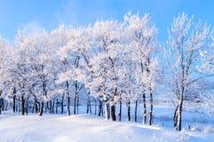 Paysage d'hiver - belle nature d'hiver avec le soleil au-dessus de la forêt d'hiver Photo stock
